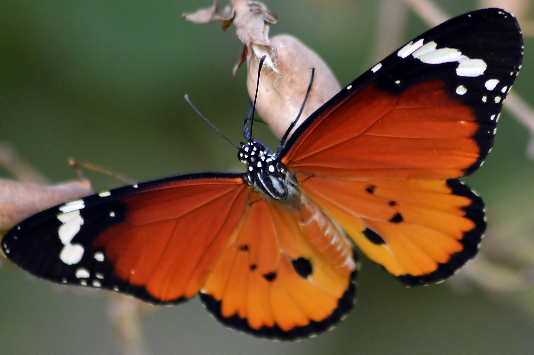 Photograph Butterfly by Hany Todros on 500px