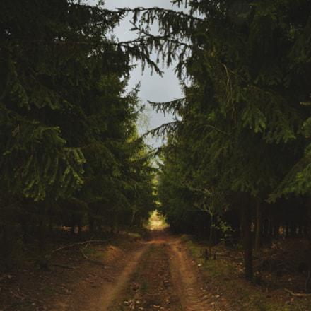 Skrze les