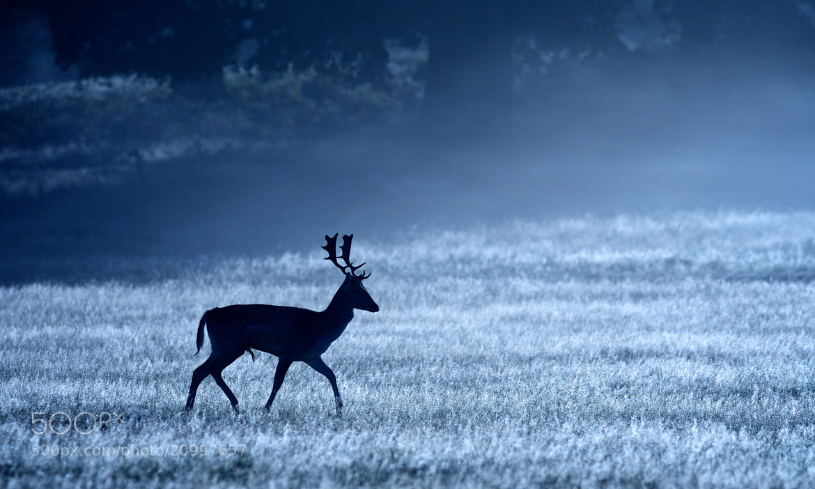 Photograph Moonlight Silhouette by Mark Bridger on 500px