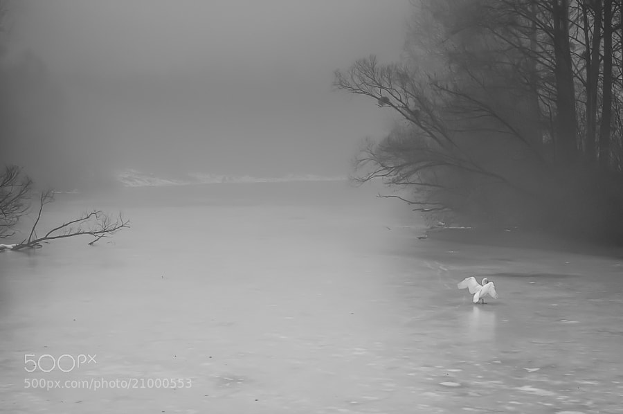 Black and white nature photograph