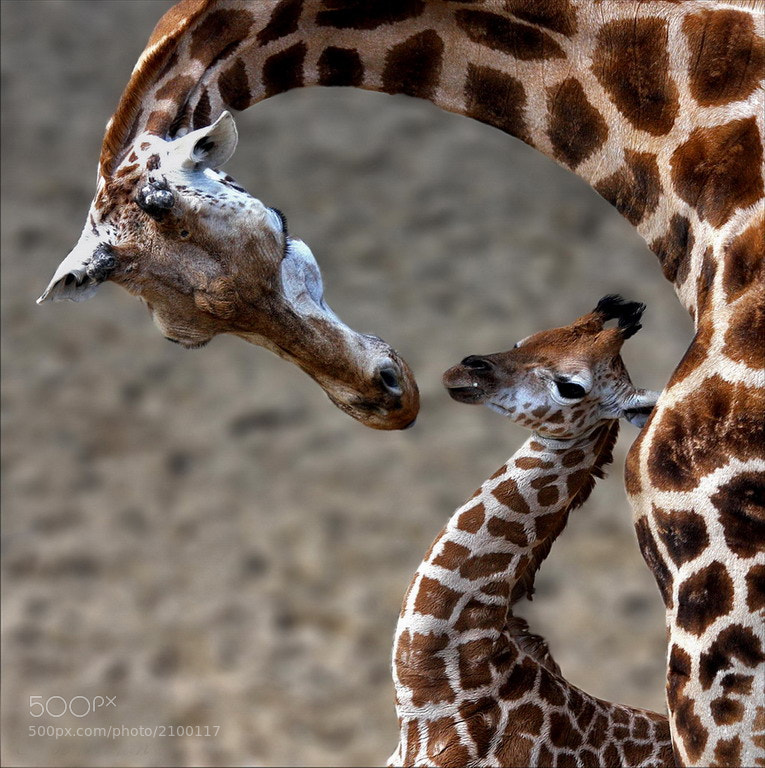Photograph A Mother's Love by Annemarie Rulos - vd Berg on 500px