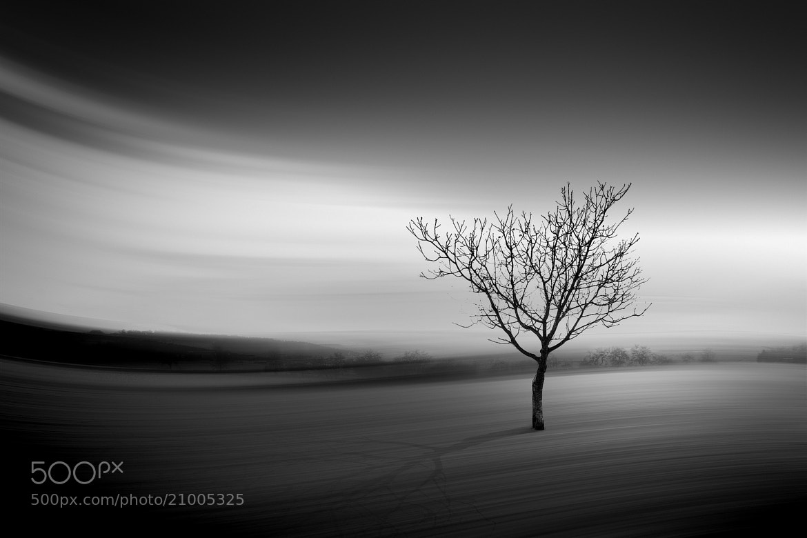 Photograph the lonely tree b&w by Max Ziegler on 500px