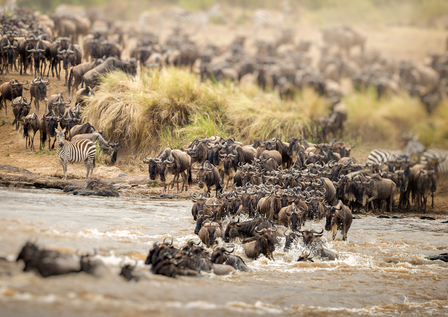 GREAT MIGRATION by Jaco Marx on 500px.com