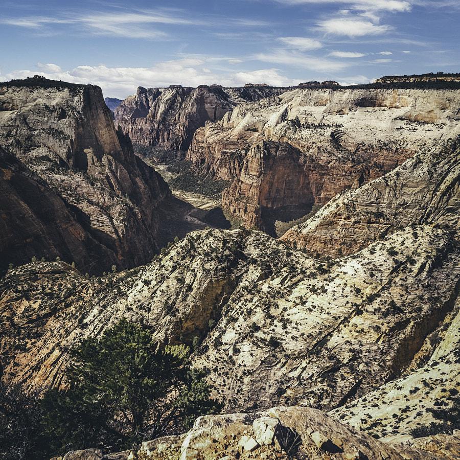 Zion National Park XLI