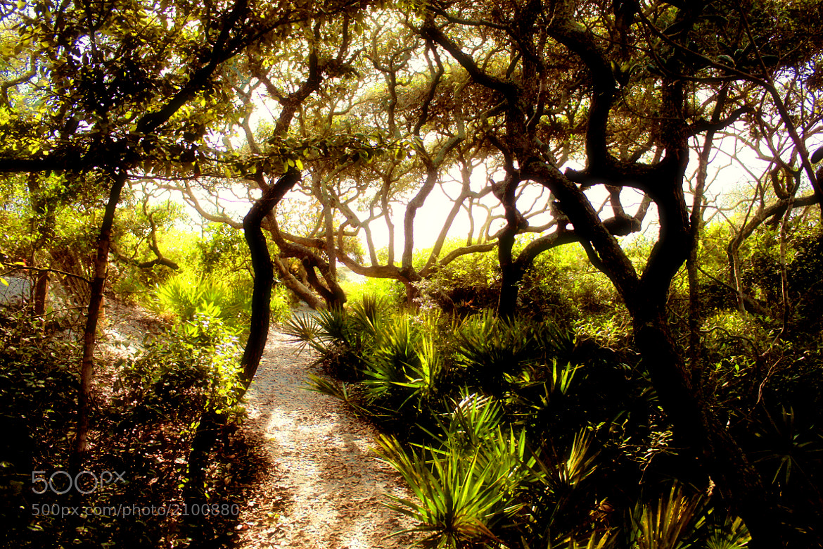 Photograph Secret path to the beach by Rachel Scroggins on 500px