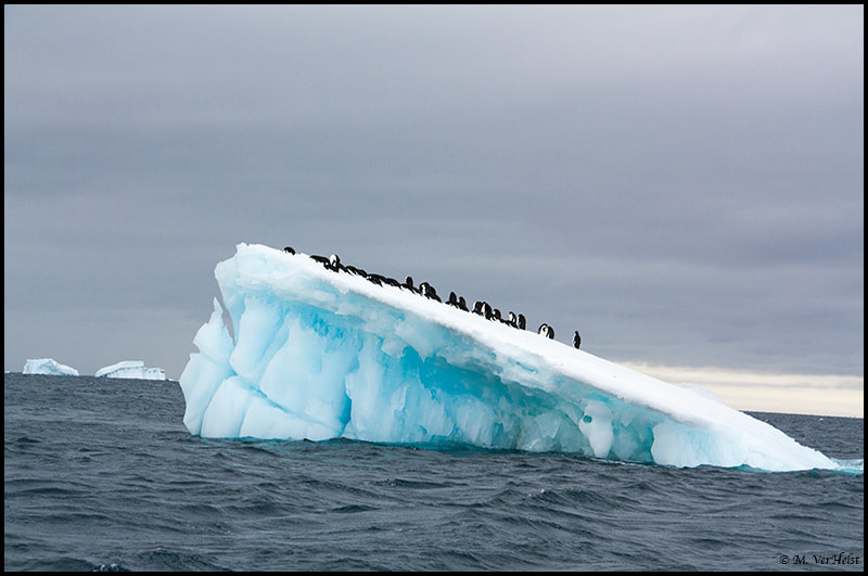 Photograph Penguins on a floating iceberg by Mary VerHelst on 500px