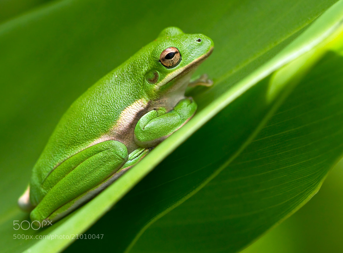 Photograph Sleepy Frog by Lorraine Hudgins on 500px