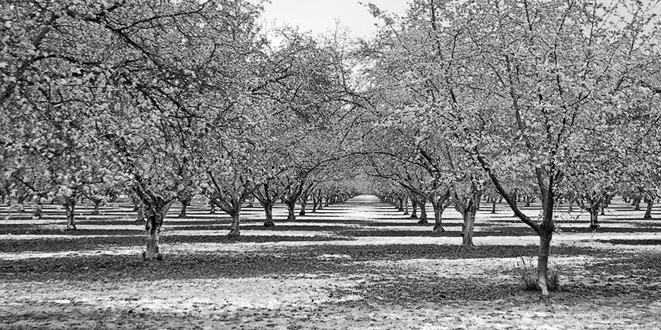 Photograph Apple Orchard by Byron O'Neal on 500px