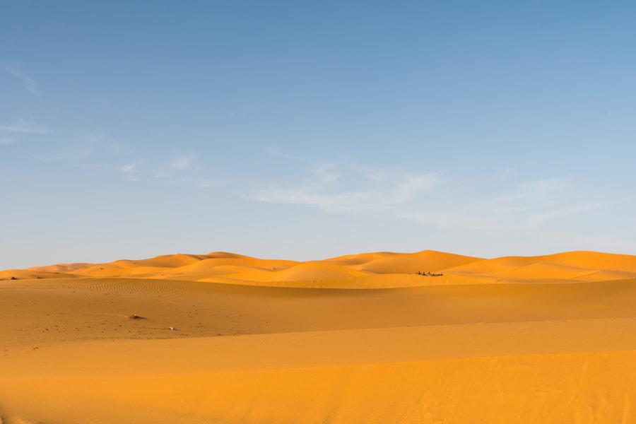 Sahara #3