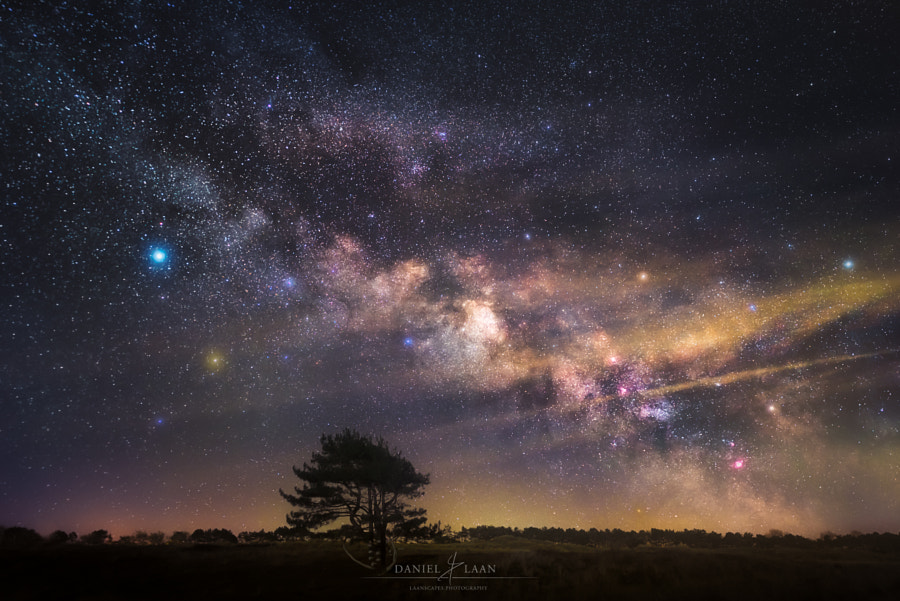 Tree of Existence by Daniel Laan on 500px.com