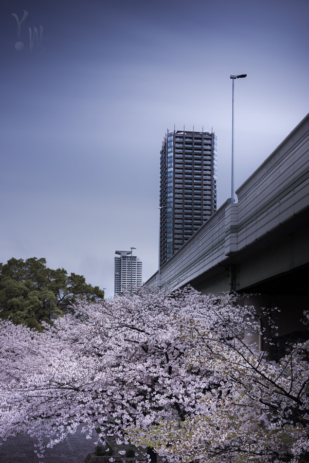 Sakura-Tower by Yoshihiko Wada on 500px.com