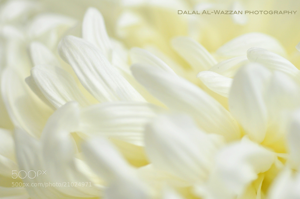 Photograph Purity by Dalal_ALWazzan on 500px