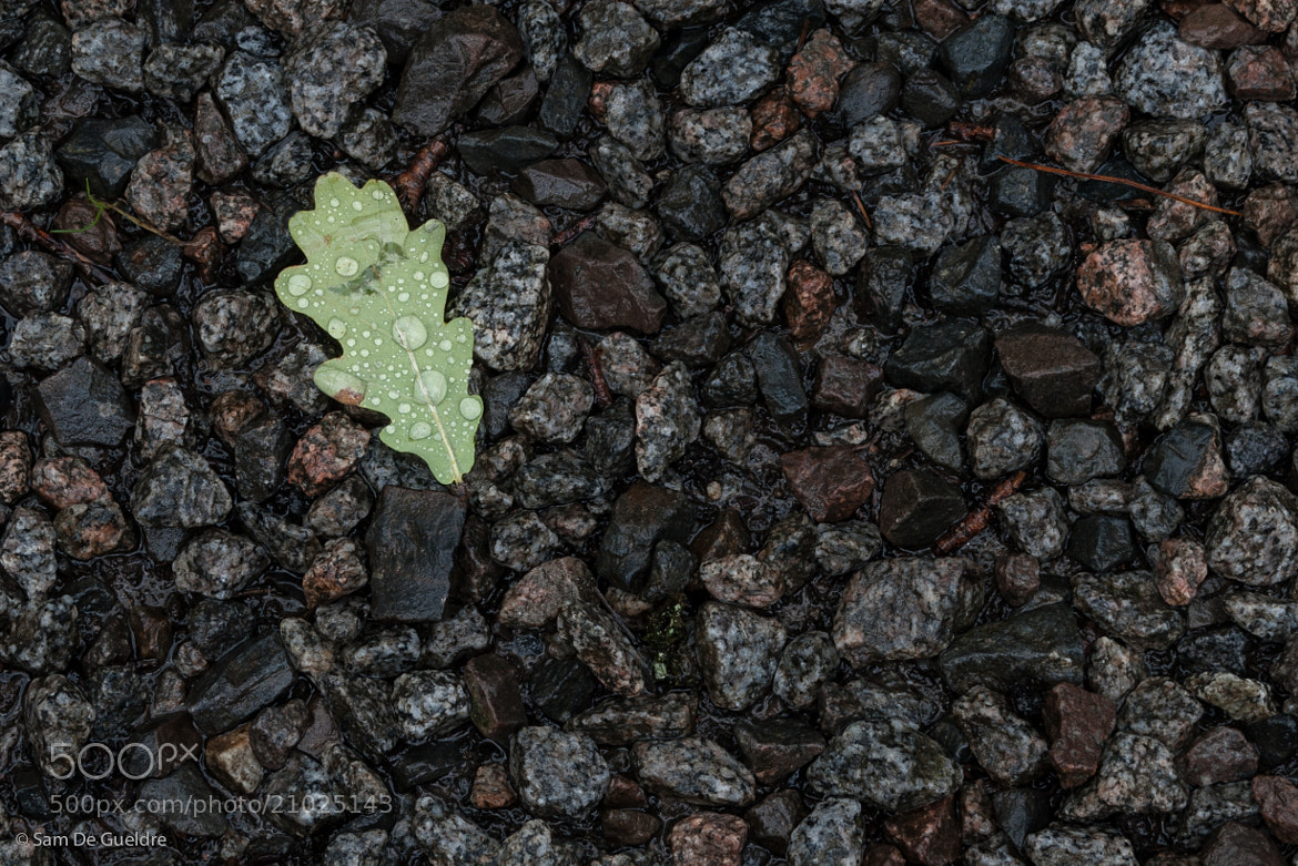 Photograph Leaf on ground by Sam De Gueldre on 500px