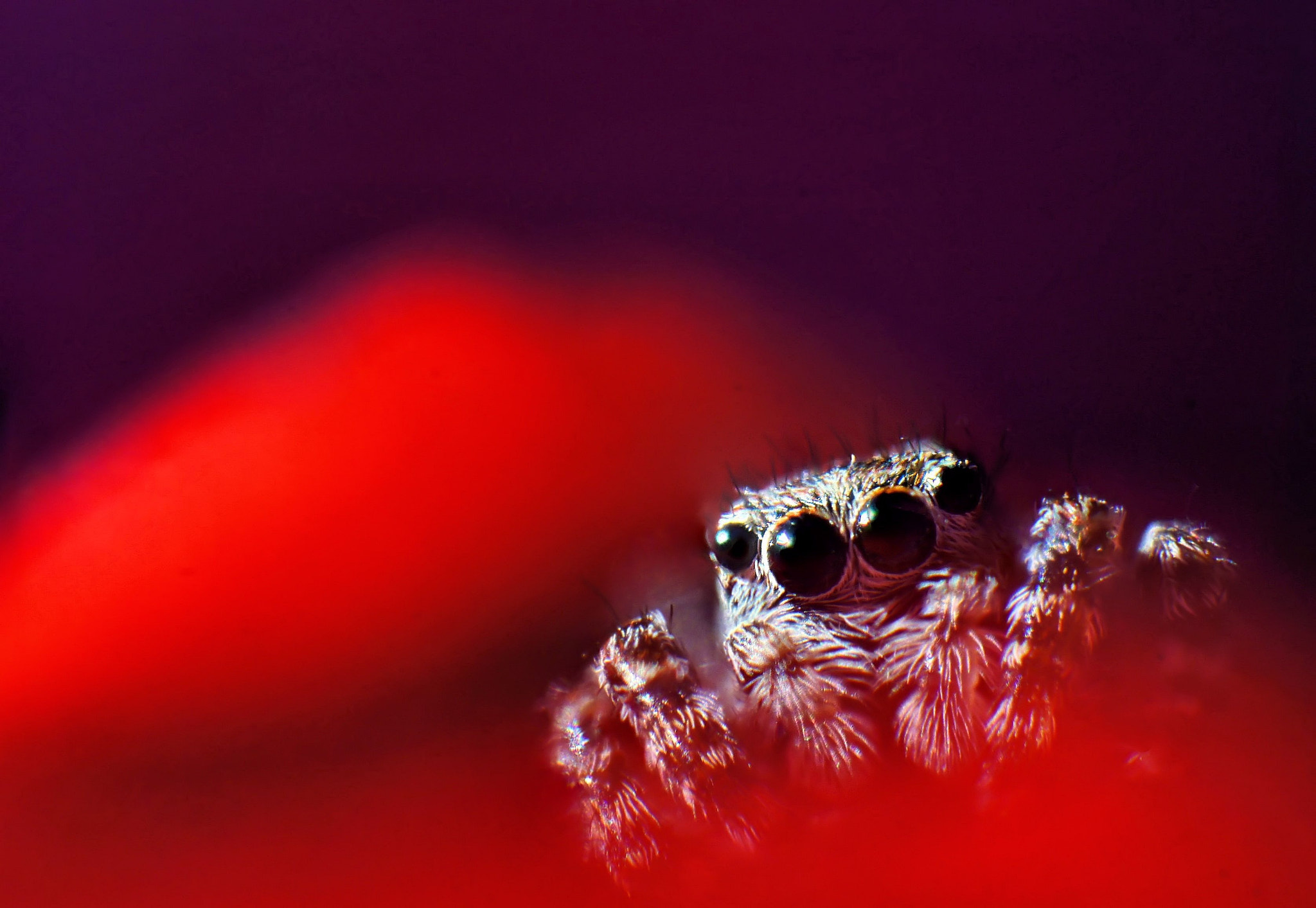 Photograph Jumper by Simon  Staszkowski on 500px