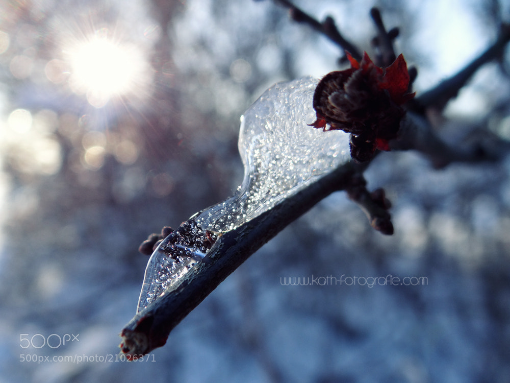 Photograph winter wonderland by Kath´s Fotografie on 500px