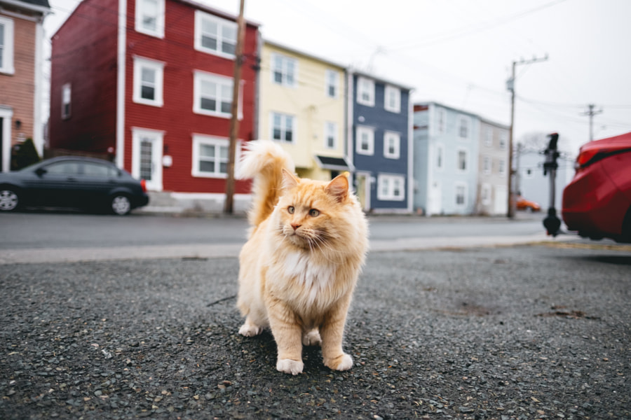 Garfield° by Drew Butler on 500px.com