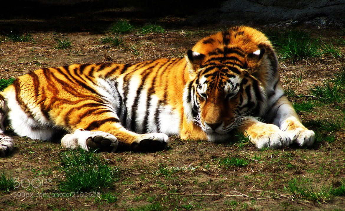 Photograph Lazy Kitty by Scott Hovind on 500px