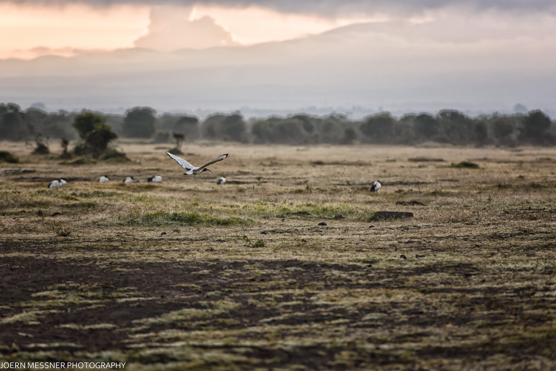 Photograph Holy Ibis by Joern Messner on 500px