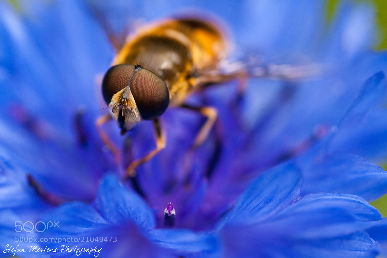Photograph Lemonfly by Stefan Mertens on 500px