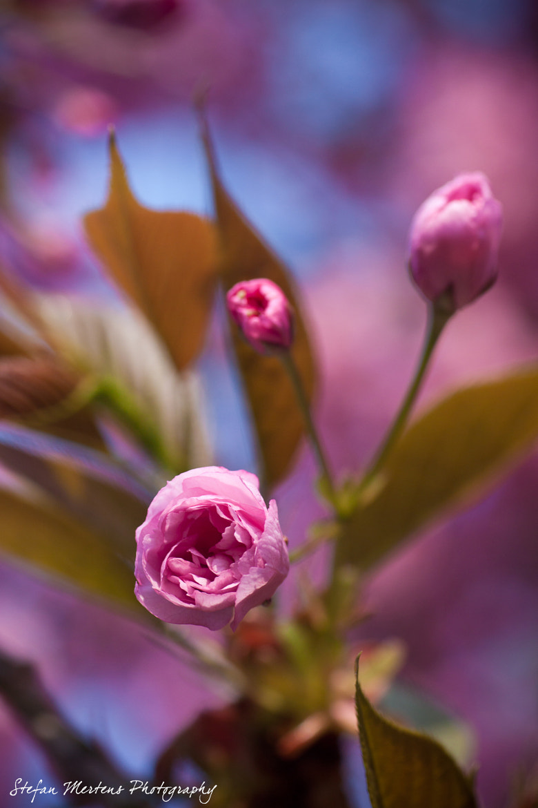Photograph Pink Delight by Stefan Mertens on 500px