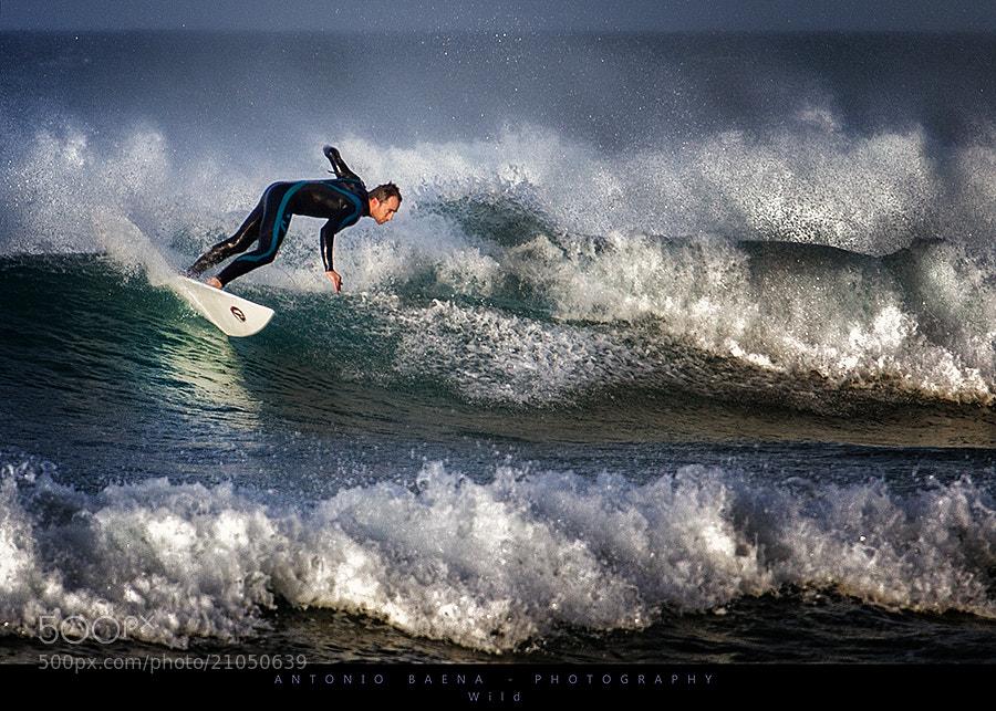 Photograph Wild by Antonio Baena on 500px