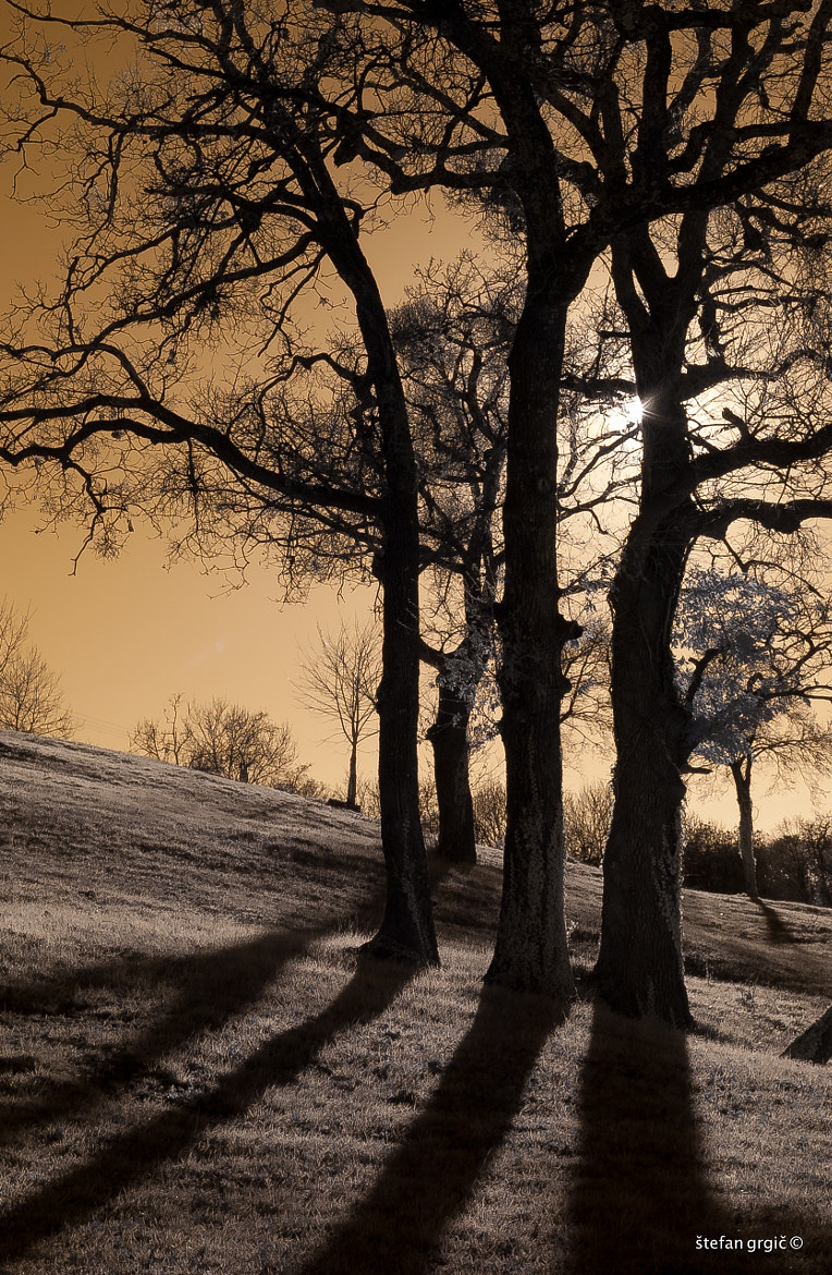 Photograph IR Land 03 by Štefan Grgič on 500px