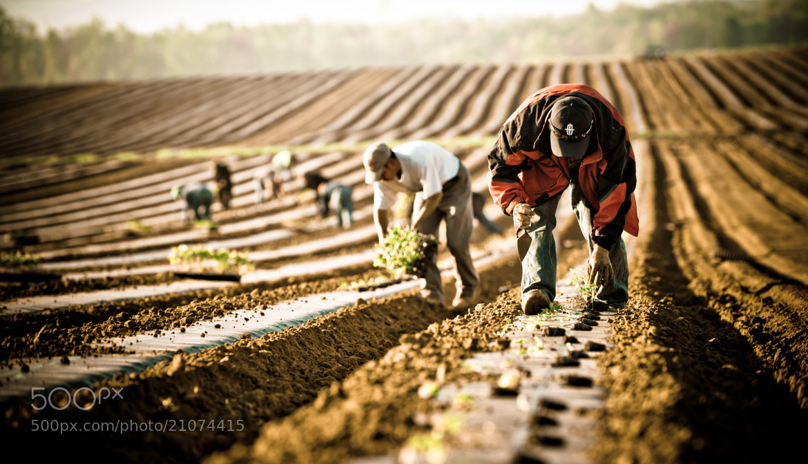 Photograph Field Workers by Russ Meseroll on 500px