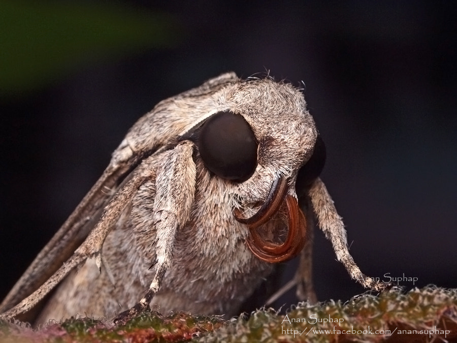 Photograph moth by Anan Suphap on 500px