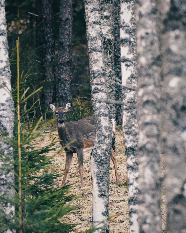 To run or to hide? by Jere Ketola on 500px.com