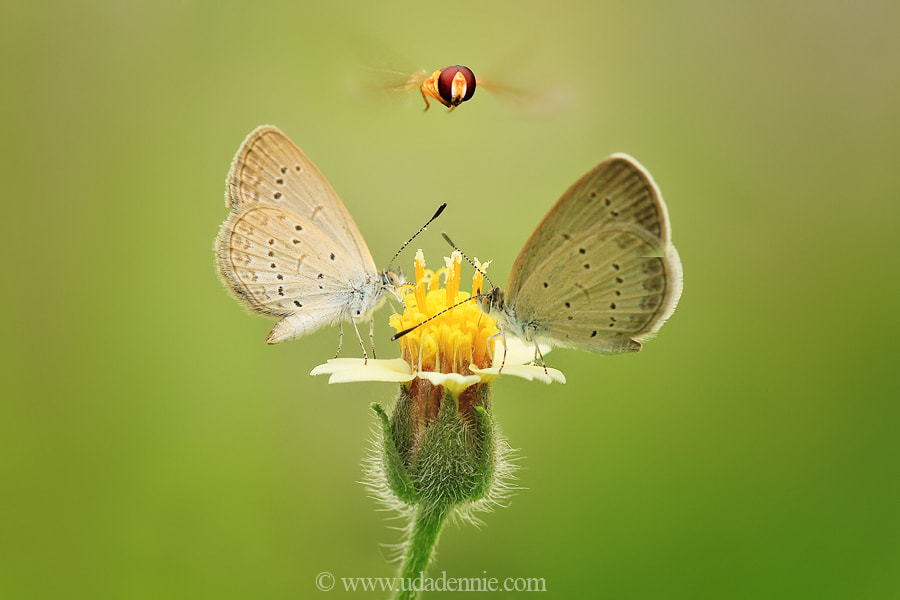 Photograph Macro never end by Uda Dennie on 500px