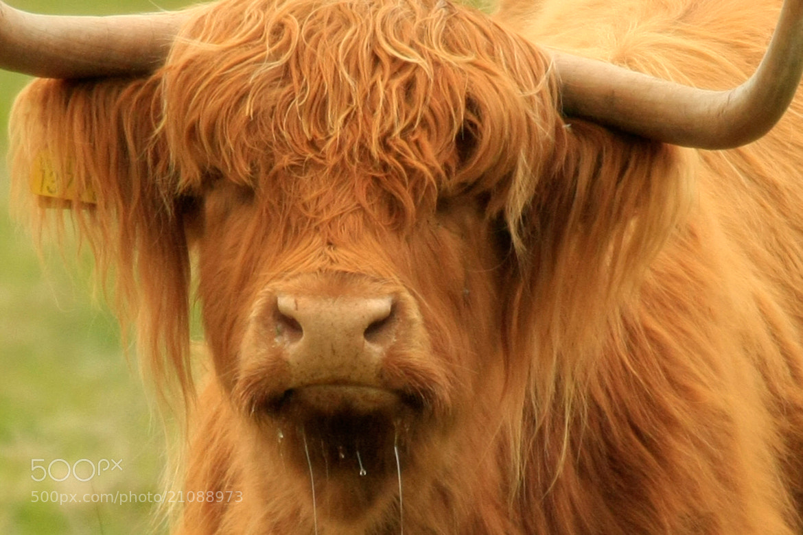 Photograph Highlander by Mike Mc Cain on 500px