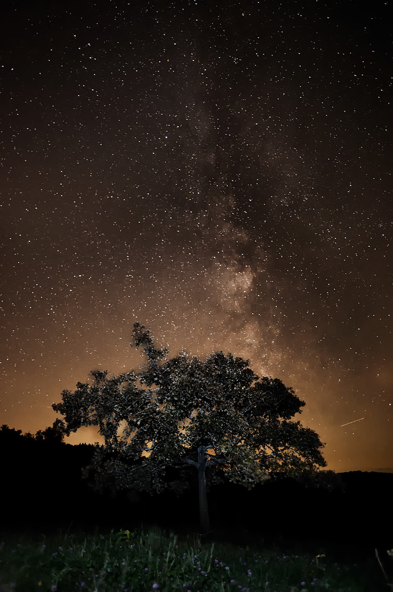 Photograph The MilkyWay and the Tree by Jay C - Project Greyhoundart- on 500px