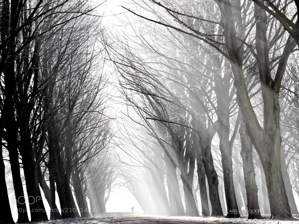 Photograph Winter's Grace by Lars van de Goor on 500px