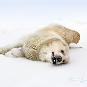 Snowy happiness. by Elen Gardzey (ElenGardzey)) on 500px.com