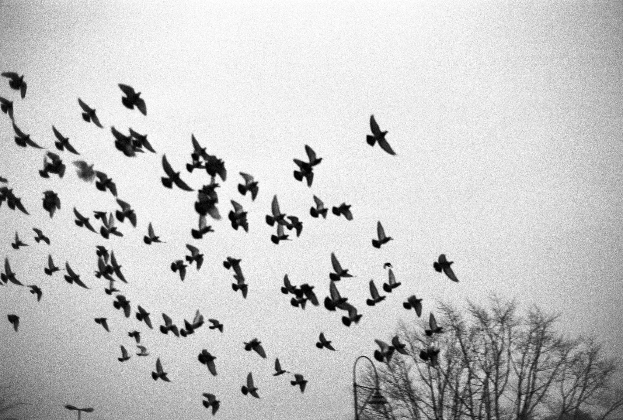Photograph Flock of Pigeons by Felix L. Esser on 500px