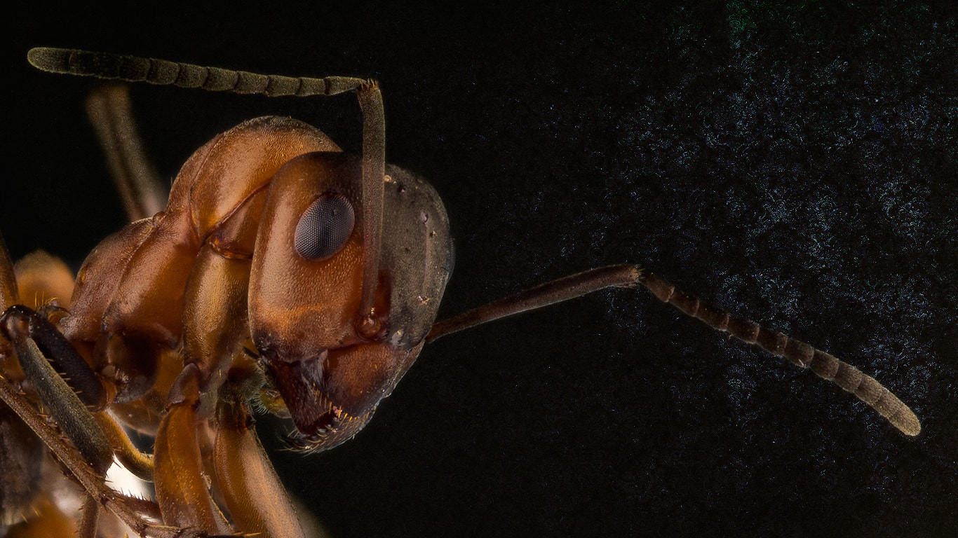 Photograph The Ant by Mikael Sundberg on 500px