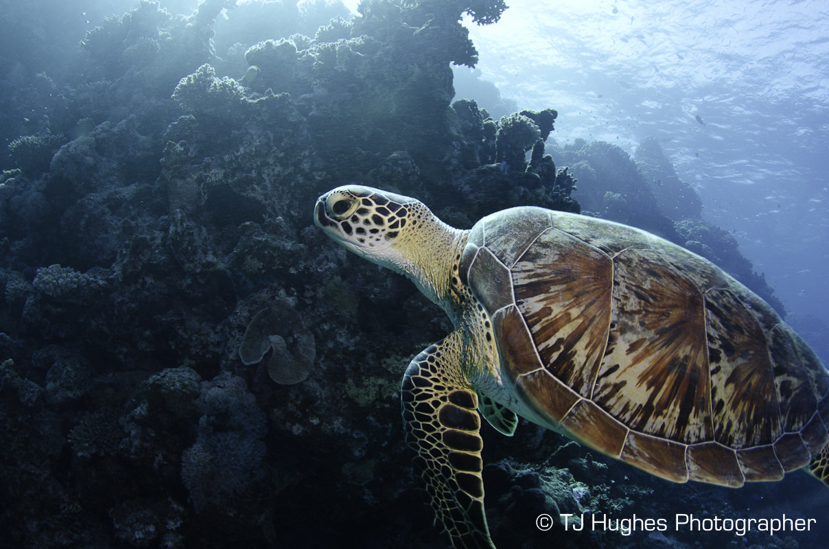 Photograph Sea Turtle by TJ Hughes on 500px