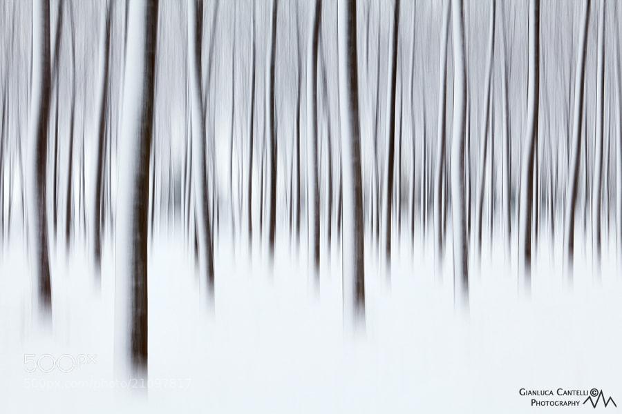 Photograph Winter Spirits by Gianluca Cantelli on 500px