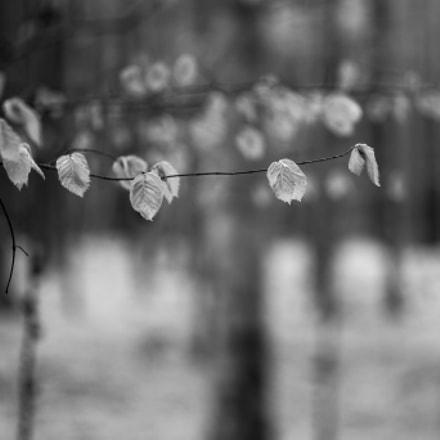 leaves of spring