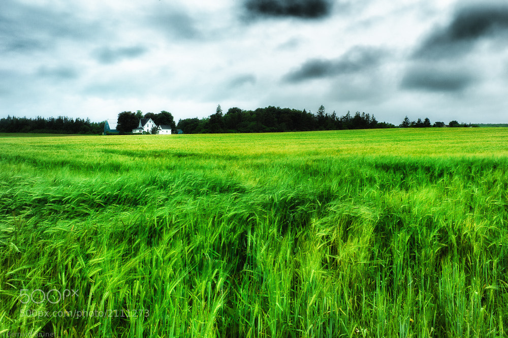 Photograph Green green grass by Bernard Brunet on 500px