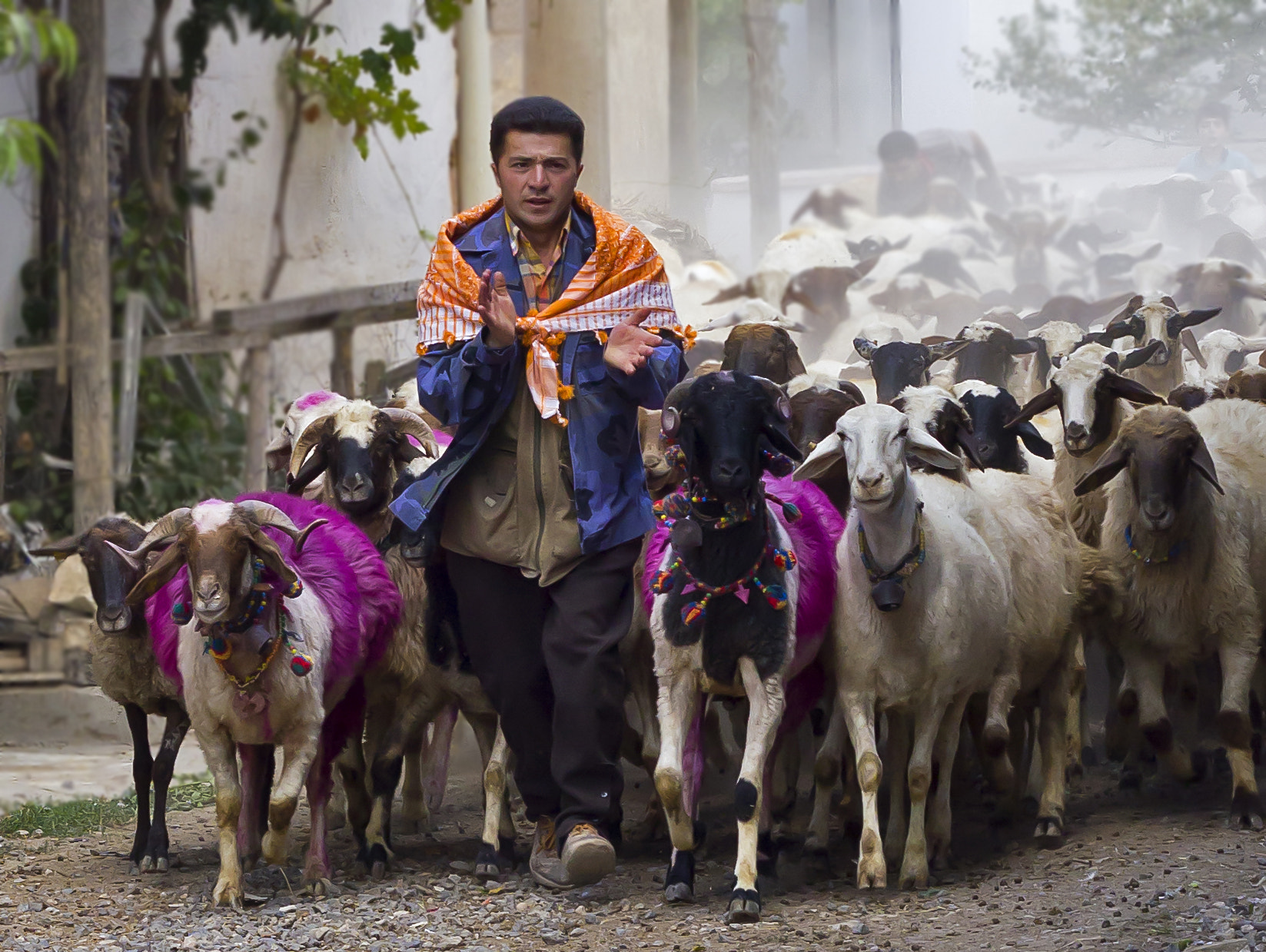 Photograph shepherd by Taskin Sel on 500px