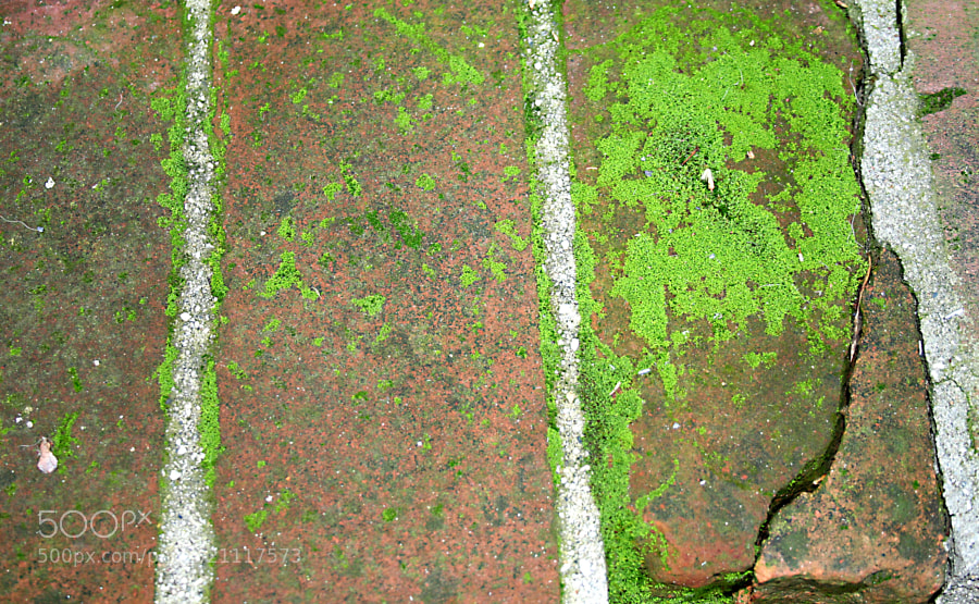 Moss growth on aging bricks.