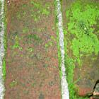 Moss growth on aging bricks.