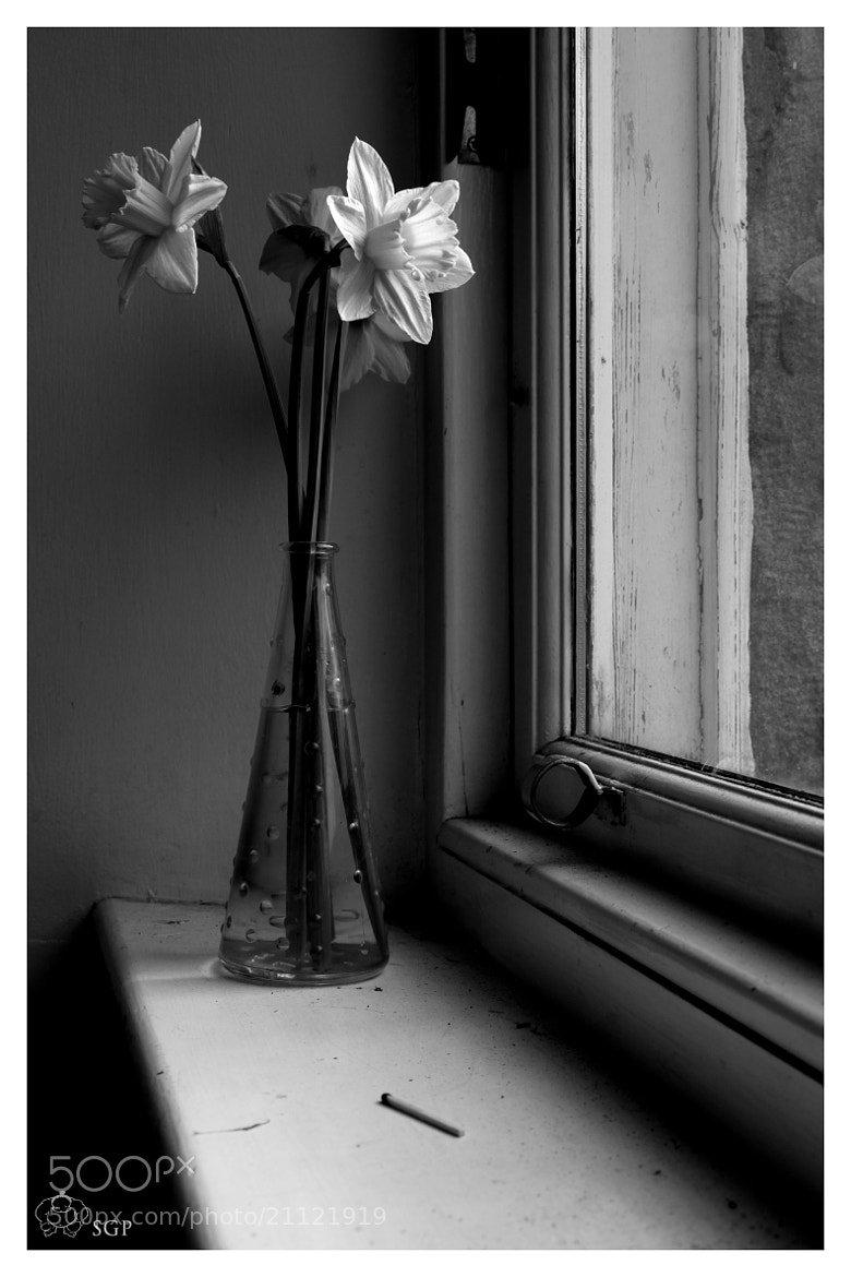 Photograph Windowsill Daffodil  by Sumo Gray on 500px