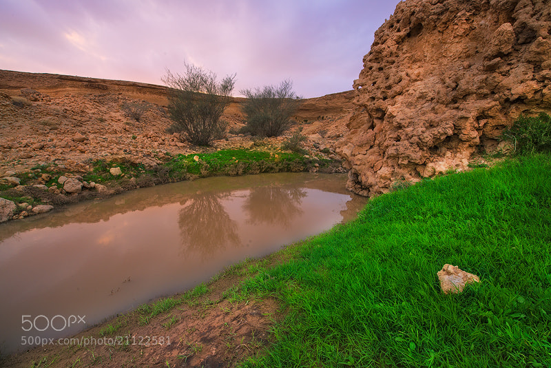 Photograph  الربيع في الصحراء (Spring in the desert) by Nasser  AlOthman on 500px