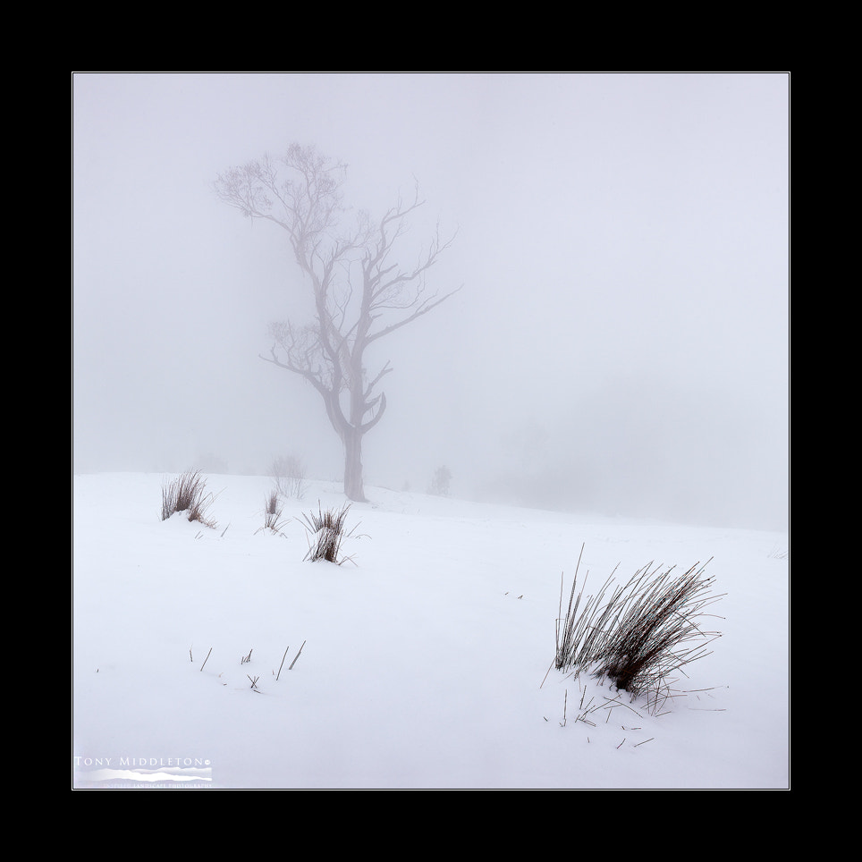 Photograph Snow tree by Tony Middleton on 500px