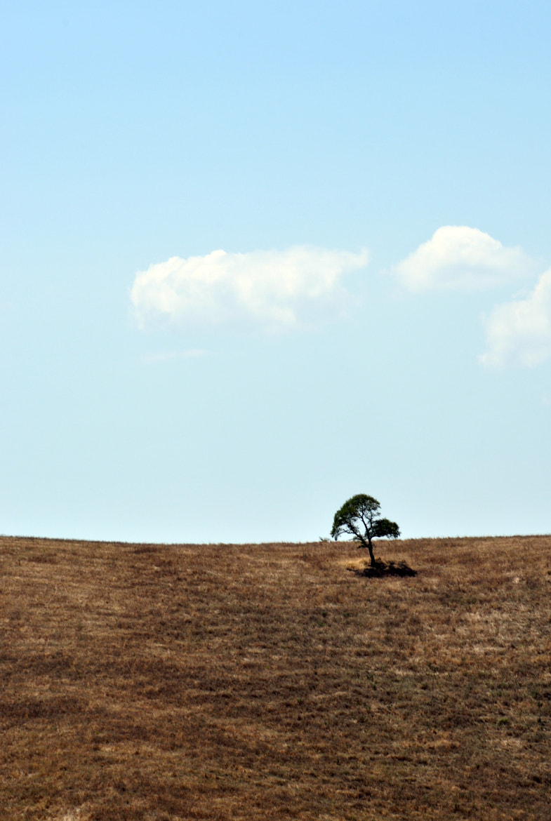 Photograph Lone Tree by Joel Vander Linde on 500px