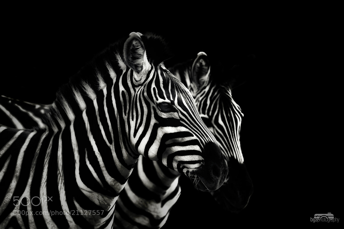 Photograph Stripes by Benjamin gs on 500px