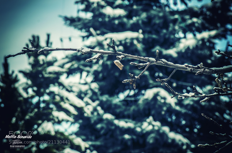 Photograph Signs of a silence autumn. by Mattia Bonavida on 500px