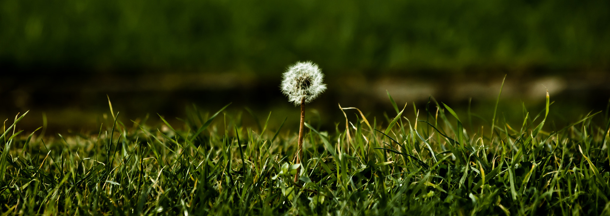 Photograph dandelion by Kazımcan Malkoç on 500px